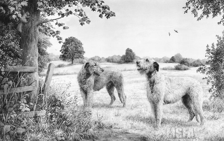 Spinney Lane End - Irish Wolfhound drawing by © Mike Sibley.