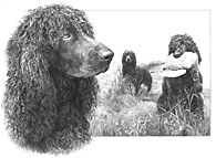 Irish Water Spaniel fine art print by Mike Sibley