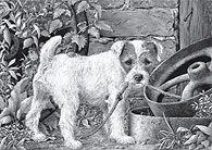 'What?' Parson Russell Terrier fine art print by Mike Sibley