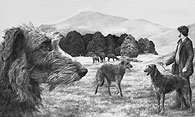 Scottish Deerhound fine art print