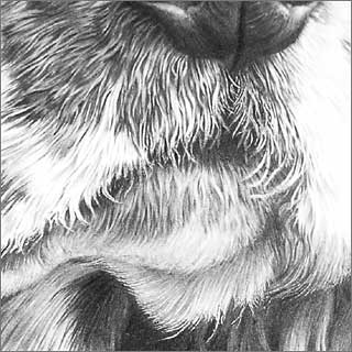 Indenting on dog's top lip