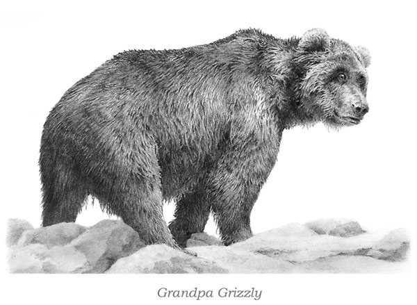 'Grandpa Grizzly' by Mike Sibley