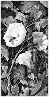 'Bindweed and Hoverfly' by Mike Sibley