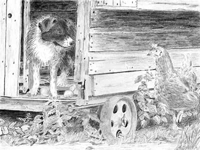 Norma's Border Collie Pup and Hen graphite pencil drawing