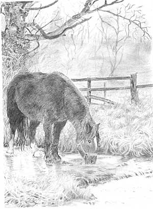 Norma's Tom the horse graphite pencil drawing