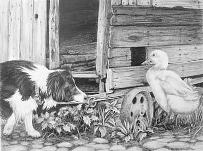 Pauline's Border Collie and Duck graphite pencil drawing