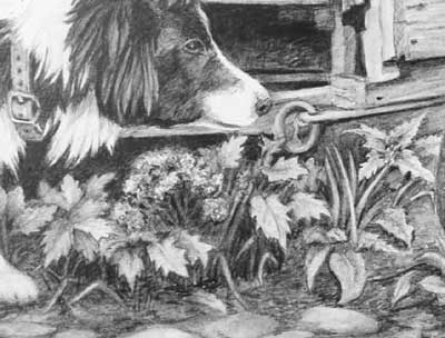 The foliage in Pauline's Border Collie and Duck graphite pencil drawing